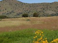 Canelo Hills