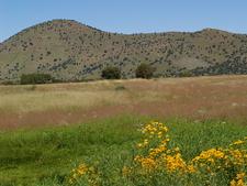 Canelo Hills Cienega Reserve