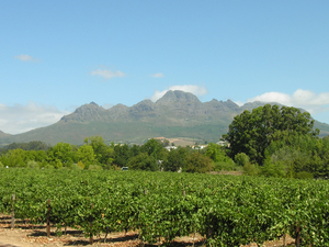 Cape Town Wine Tours Photos