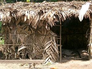 Cameroon Pygmy Discovery Photos