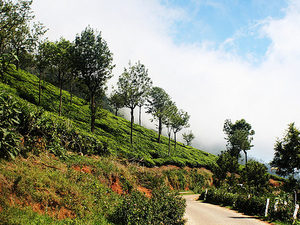 Ooty Package Photos