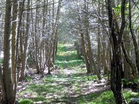 Cemetery Trail 255