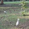 Central Park (Kolkata)