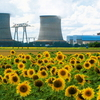 Sunflowers And The Nuclear Power Station