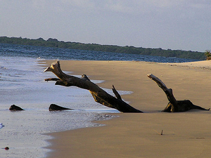 Kenya Safari & Beach Holiday Package Photos
