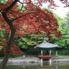 Changdeokgung Palace Garden Seoul