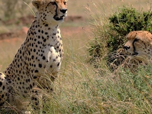 Exclusive Safaris in Kenya‎ Fotos