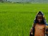 Children In Rice Fields - Rwanda