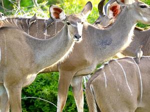 Chobe National Park Day Tour (ThisAndThat Safaris-Zimbabwe) Photos
