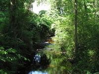 Cochato River
