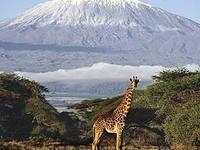 Africa Joy Tours  & Tanzania Wildlife Safaris