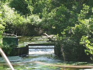 Connetquot River