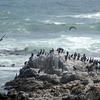 Cormorants, Die Kelders