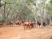 Coronation Point Pony Stand - Matheran - Maharashtra - India