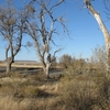 Cottonwoods C Vaughn