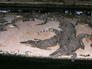 Mamba Village Visit (Crocodile Farm Tour) Photos