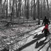 Cygnet Lakes Trail