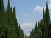 Cypress  Alley In  Simeiz
