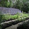 Dagny Johnson Key Largo Hammock Botanical State Park