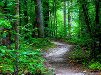 Dan's Trail 550