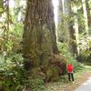 Davison Trail