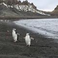 Deception Island Atracciones Turísticas - Turismo en la Antártida