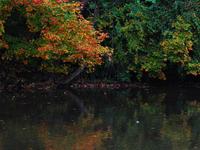 Doe River