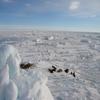 Dogsled Adventure In Ittoqqortoormiit