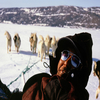 Dogsled Adventure In Qaanaaq