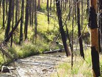 Dollar Creek Ridge Trail