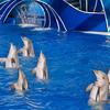 Dolphin In SeaWorld San Diego