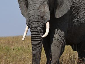 Tanzania Great Rift Valley Adventures