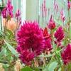 Flowers In Bloom - Lloyd's Botanical Garden