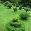 Lloyd's Botanical Garden - Sculpted Bushes