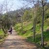 Trailview