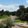 Sand River - Masai Mara