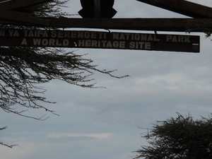 Serengeti on a budget