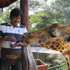Jayesh Bagde At Giraffe Center