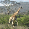 Tanzania Masai Tours & Safaris