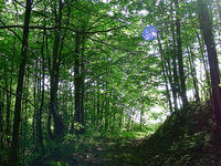 East Mountain Trail 214