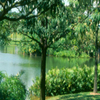 Eco-Lake, Singapore