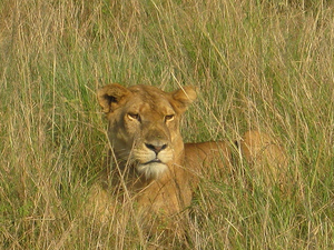 Book Now - Wildlife Safari Queen Elizabeth National Park Photos