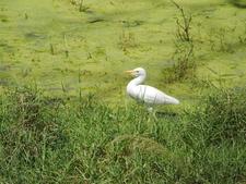 Egret Lake Nakuru