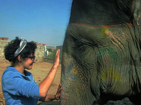 Volunteer Elephants India