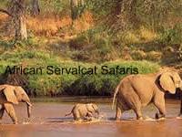 Servalcat Safaris