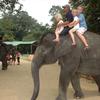 Kuala Gandah Elephant Orphanage Sanctuary