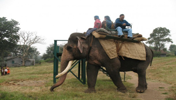 Elephant Safari And Feeding Camp