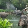 Elephant Show And The Trainers