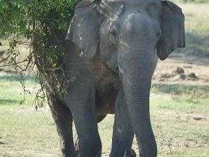 UNESCO Heritage Sites & Wildlife Safari In Sri Lanka Photos