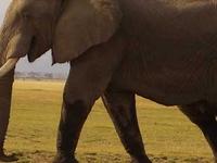 Masai Mara Safari 4 Days